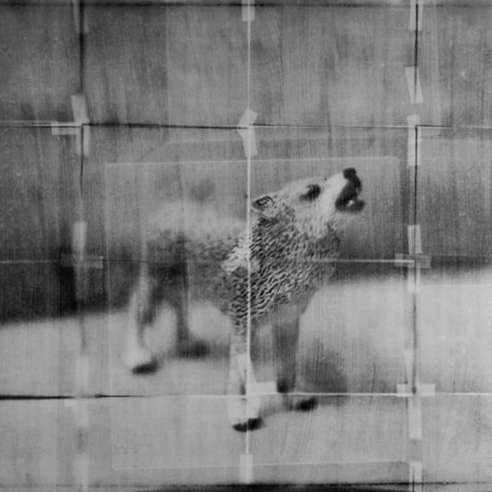 Howl-noframe-croppedBW